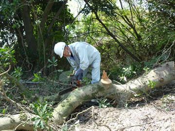 伐採作業5