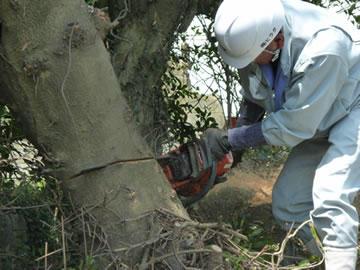 伐採作業6