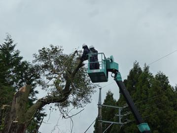 伐採作業8